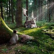 穿过风穿过森林穿过大自然
