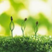 爱种子智慧