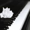 听了让人安静的钢琴曲