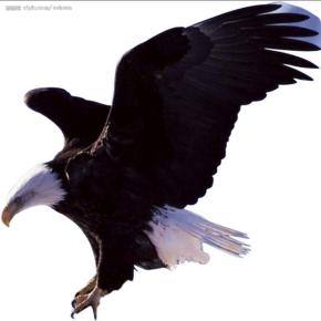 黑鹰传奇 粤语小说 全240回