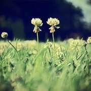 你若盛开,清风自来--让心灵像花儿一样快乐地盛开4-喜马拉雅fm