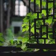 钱钟书 | 窗-喜马拉雅fm