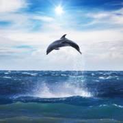大海豚课程分享