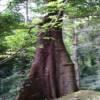 德宏傣族景颇族自治州-莫里热带雨林