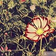 选自《颜氏家训》-喜马拉雅fm