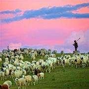 63:我们在钢筋水泥的城市吸霾,他在经幡飞舞的草原放羊-喜马拉雅fm