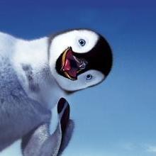 企鹅叨逼叨