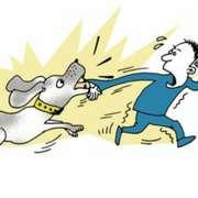 贼和看家狗-喜马拉雅fm