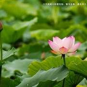 一切皆为过往,快乐才是人生!-喜马拉雅fm