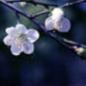 song_ji