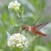 精选 大自然声音 ♫ 潺潺流水,鸟语虫鸣(九)