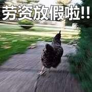 鸡年一过,鸡儿就放假了-喜马拉雅fm