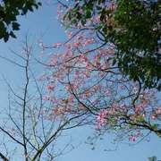 #第八十七天 01020《捐诚》A023|唐文清#-喜马拉雅fm