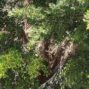 阿城《树王》节选-喜马拉雅fm
