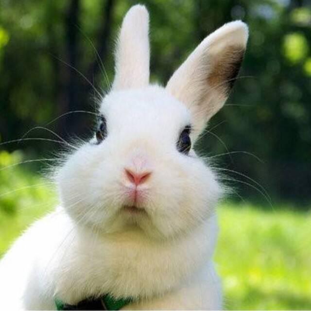 小兔子的黑眼睛
