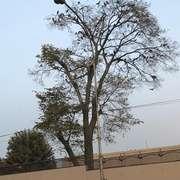 漂亮的乌鸦-喜马拉雅fm