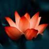 心灵催眠天籁发烧放松减压觉醒