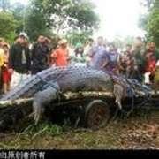 捕获史上最大鳄鱼-喜马拉雅fm