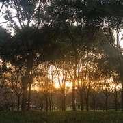 浪淘沙令·帘外雨潺潺-喜马拉雅fm