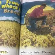 From wheat to bread-喜马拉雅fm