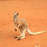 澳洲移民|澳大利亚商业