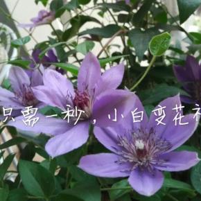 跟着晓树学种花