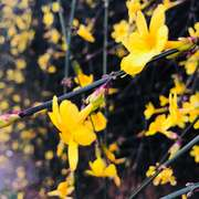 早春 春暖花开-喜马拉雅fm