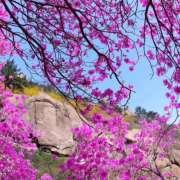 王梓煜英语作业(2018.4.14)-喜马拉雅fm