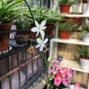 触摸春天-喜马拉雅fm