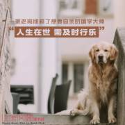 一条老狗拯救了想要自杀的国学大师,人生在世,需及时行乐