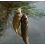 跟九弓学钓鱼