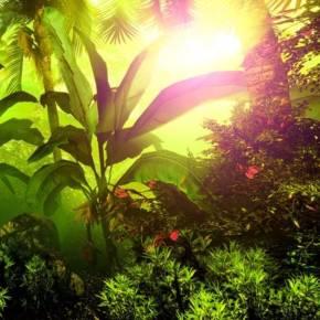 热带雨林游戏音乐