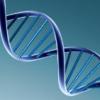《DNA:生命的秘密》:读懂基因编写的生命之书