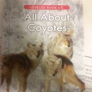 All About Coyotes 71