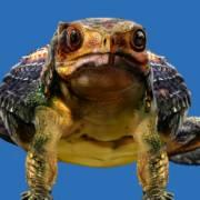 会游泳会吃鱼的甲龙类恐龙-辽宁龙雨晴