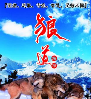 新狼道-狼之团队