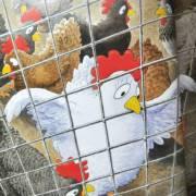 爱冒险的鸡(第三章)