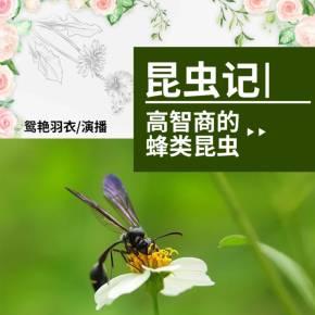 昆虫记2高智商的蜂类昆虫